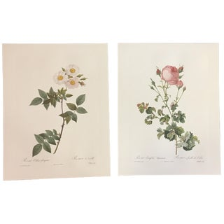 Pair of Botanical Prints After Pierre-Joseph Redouté For Sale