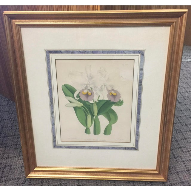 Glass Botanical Print of Orchids For Sale - Image 7 of 7