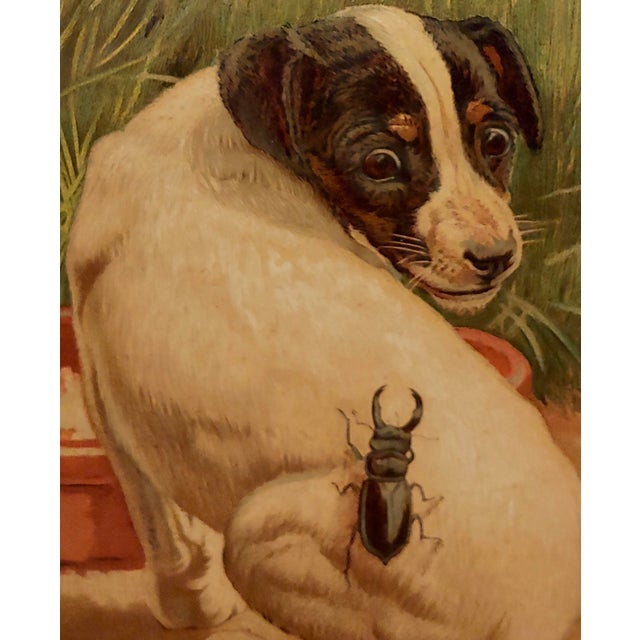 """Late 19th Century Late 19th Century Antique Edmund Caldwell """"Jack Russel Puppy With A Stag Beetle"""" Painting For Sale - Image 5 of 9"""