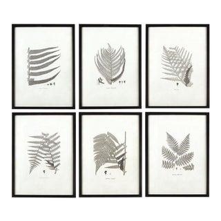 Kenneth Ludwig Chicago Framed Gray-Tone Fern Prints - Set of 6 For Sale