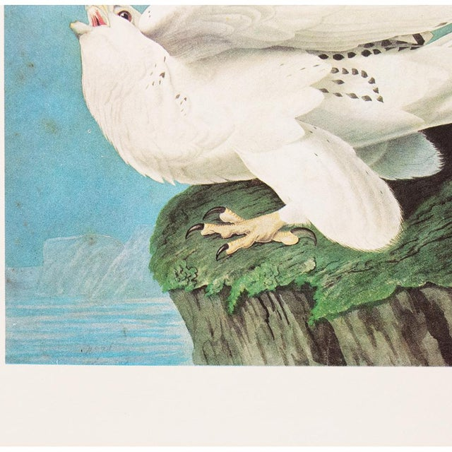 """Printmaking Materials 1966 Cottage """"Gyrfalcon"""" Vintage Print by Audubon For Sale - Image 7 of 11"""