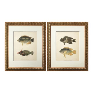Antique Pair of Hawaiian Fish Chromolithographs 1905 For Sale