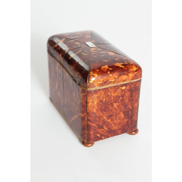 Early 19th Century English Regency Tortoiseshell Tea Caddy For Sale In Dallas - Image 6 of 13