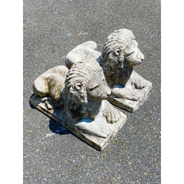 Stunning pair of vintage concrete garden lions. A pair of sitting proud handsome boys. They have the coloration of statues...