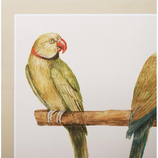 American Classical 1590s Large Print of Alexandrine Parakeet & Red-Breasted Parakeet by Anselmus De Boodt For Sale - Image 3 of 9