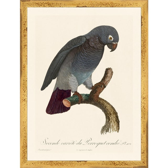 Jacques Barraband Grey Parrots Framed - Set of 4 For Sale - Image 4 of 12