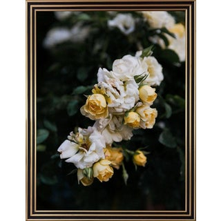 """""""Roses, Dawn I"""" Still Life Photograph 2014 by Nick Burchell For Sale"""