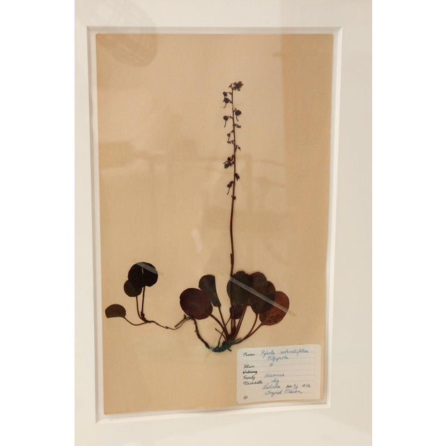 Framed Set of Four Herbaria For Sale - Image 4 of 12