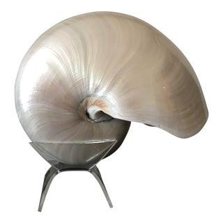 Vintage Pearl Nautilus Seashell on Stand For Sale