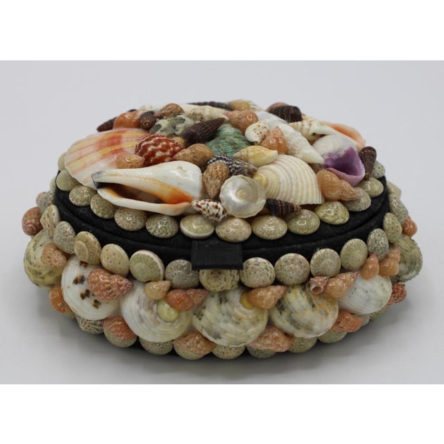 Mid 20th Century Vintage Organic Seashell Jewelry Treasure Box For Sale - Image 12 of 12