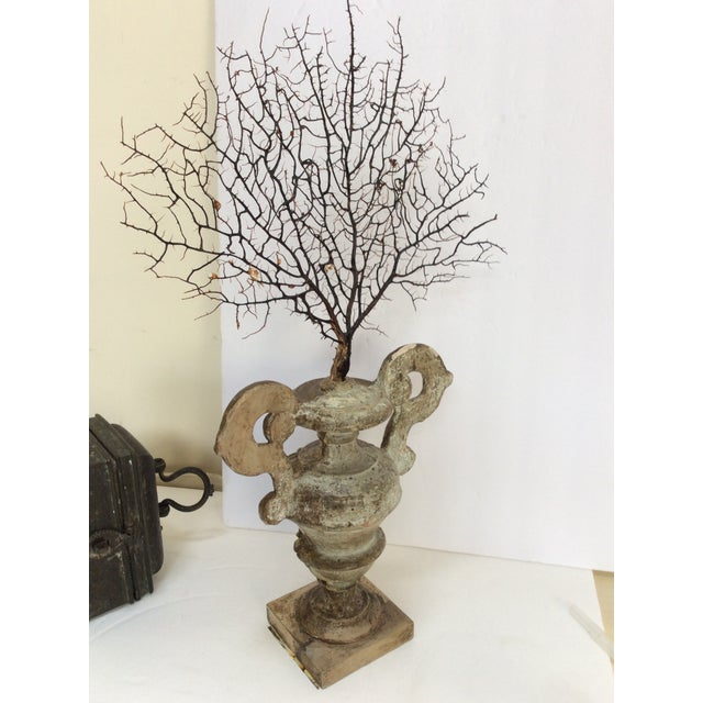 Ornamental & Decorative Materials Antique Italian Silvered Wood Urn With Sea Fan For Sale - Image 7 of 8