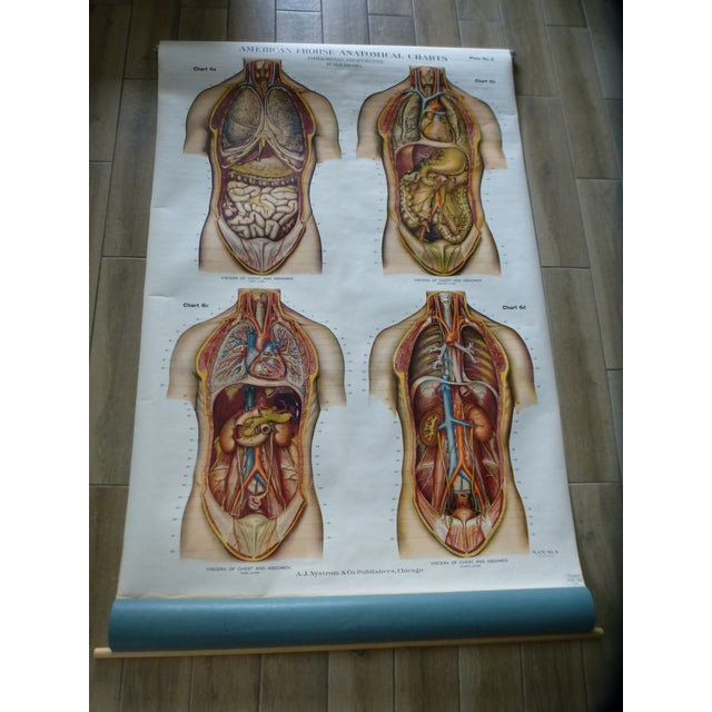 Vintage American Frohse anatomy chart - Abdomen . This classroom pull-down chart is in excellent condition. It came from a...