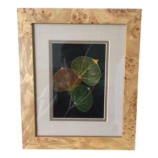 Botanical Leaf Shadow Box For Sale