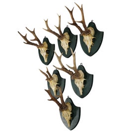 Image of Horn Wall Accents