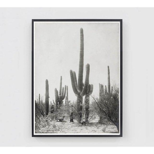 Vintage Cactus Photo - 1900s Tuscon - Vintage Desert Print For Sale - Image 4 of 4