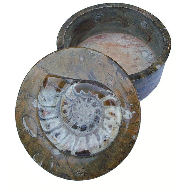 Ammonite and Orthocerus Carved Box - Image 1 of 5