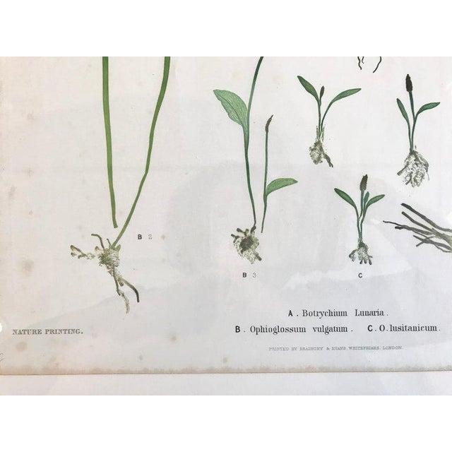 19th Century Bradbury & Evans Nature Printed Fern Print For Sale - Image 4 of 7