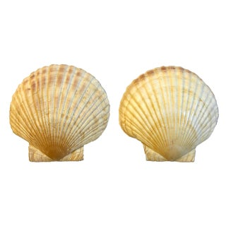 Vintage Clam Shells, Set of 2 For Sale