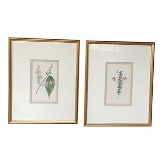 19th Century Antique Engraved Botanical - a Pair For Sale