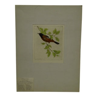 """Benson B. Moore Limited Edition Original """"Orchard Oriole"""" Signed Etching"""