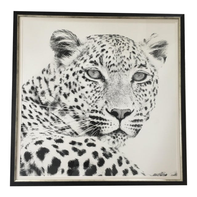 Black and White Cheetah Photograph For Sale