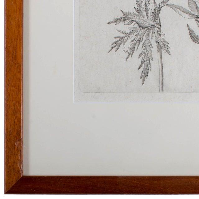 1719 De Bry Botanical Engravings - a Pair For Sale In Savannah - Image 6 of 6