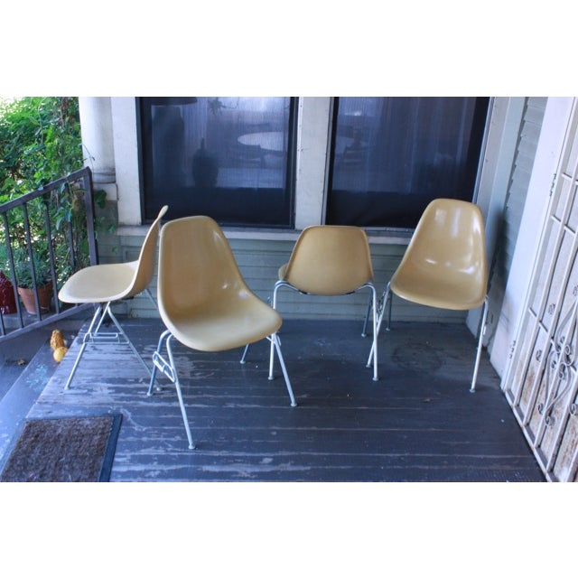 Vintage Yellow Eames Shell Chairs - Set of 4 - Image 2 of 10
