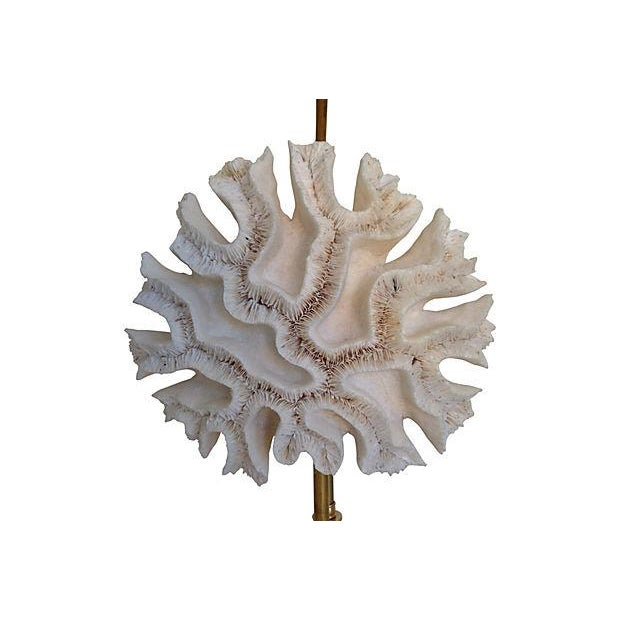 Nautical Natural Coral Lamps - a Pair For Sale - Image 3 of 9
