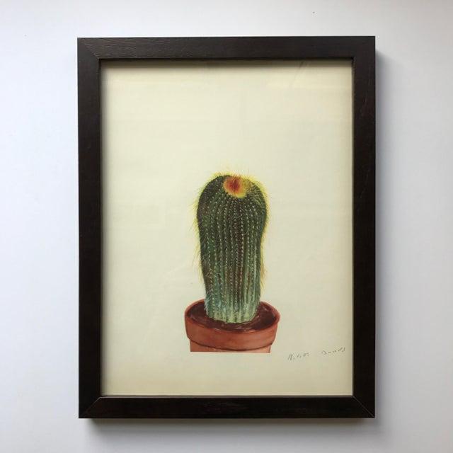 Framed Rock Plants - Set of 32 For Sale - Image 9 of 11