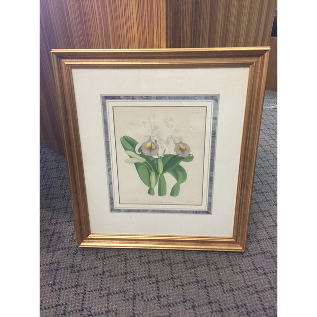 Botanical Print of Orchids For Sale In San Francisco - Image 6 of 7
