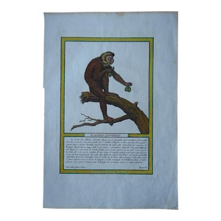 Antique Copperplate Engraving-Monkey-Italy c.1812 For Sale