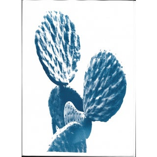 Original Cyanotype Print Totally Handmade From A, Succulent Cactus (Limited Edition) For Sale