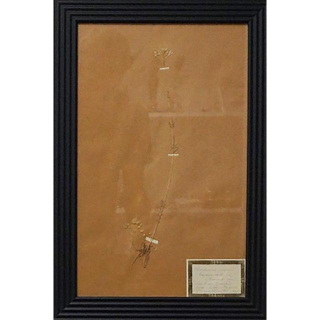Brown French Framed Botanicals - Set of 8 For Sale - Image 8 of 10