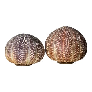Sea Urchin Pomanders - A Pair For Sale