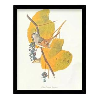 Custom Black Wood Frame of Authentic Vintage John James Audubon White Crowned Sparrow Bird & Botanical Print For Sale