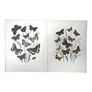 Authentic Antique 19th Century Butterflies/Moths Chromolithographs-A Pair For Sale