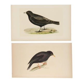 Antique Hand-Colored Aviary Wood Engravings - A Pair For Sale