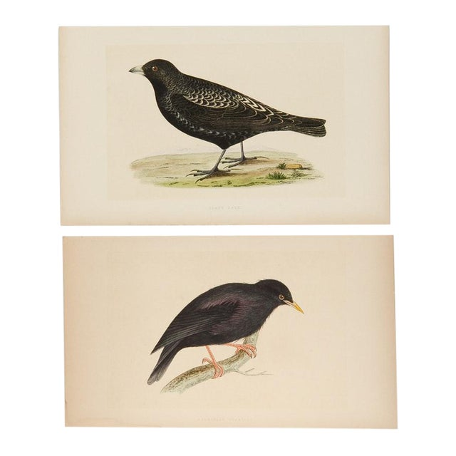 Antique Hand-Colored Aviary Wood Engravings - A Pair - Image 1 of 9