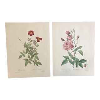 Pair of Pink Botanical Prints After Pierre-Joseph Redouté For Sale