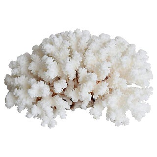 Natural Ocean Sea White Coral Specimen For Sale