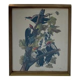 Image of Country Framed Pileated Woodpecker From John James Audubon For Sale