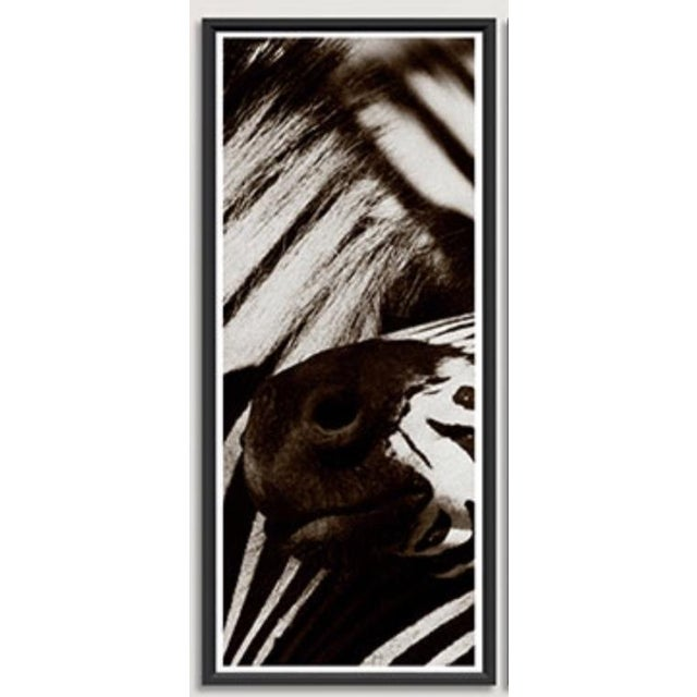 """Framed Trowbridge """"Zebra"""" Photo Triptych by Jamie Thorn, limited edition giclees on white cotton rag watercolor paper,..."""