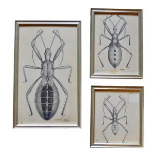 1920's Vintage Bug Drawings by PJ Godfrey- Set of 3 For Sale