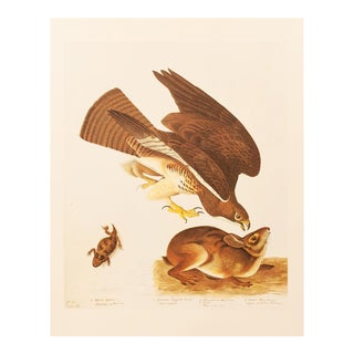 1966 Swaison's Hawk by John James Audubon For Sale