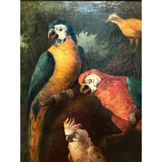 Jacob Bogdani Follower, Still Life With Parrots Oil on Canvas For Sale - Image 11 of 13