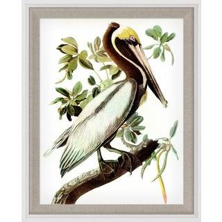 Audubon 15, Framed Artwork For Sale