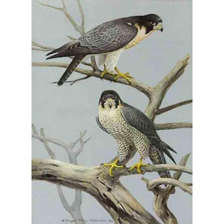 "Roger Tory Peterson ""Peregrine Falcon"" Original Signed Limited Edition Print For Sale"