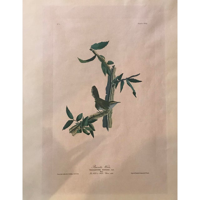 Asian R. Havell Audubon Engraving For Sale - Image 3 of 8