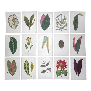 Antique 19th Century Botanical Lithographs-Ornamental Leaves-Set of 15 For Sale