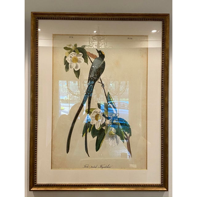 Traditional Matted and Framed Bird and Floral Prints - a Pair, Framed For Sale - Image 3 of 5